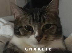 Je m'appelle Charlie, j'ai été adopté par Elsa.